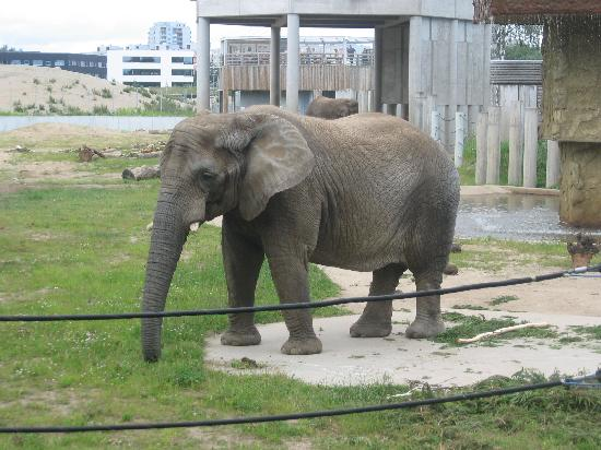 Elephant Kuva Tallinn Zoo Tallinna Tripadvisor
