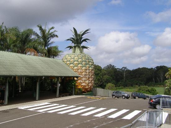 The Big Pineapple: Big Pineapple
