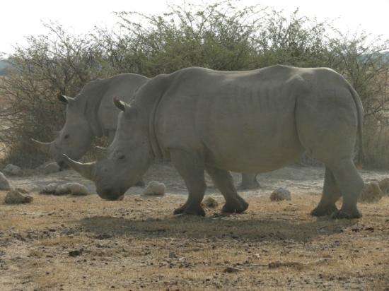 Khama Rhino Sanctuary: Very comfortable around the vehicle
