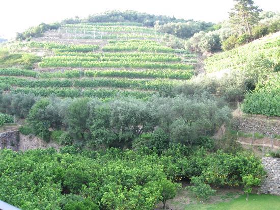 Buranco: The vineyard.