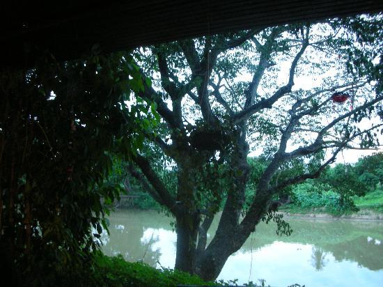 Baan Nam Ping Riverside Village: Baannamping Riverside Village grounds