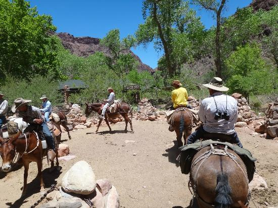 Phantom Ranch: Arriving at the Phamtom Ranch Corral