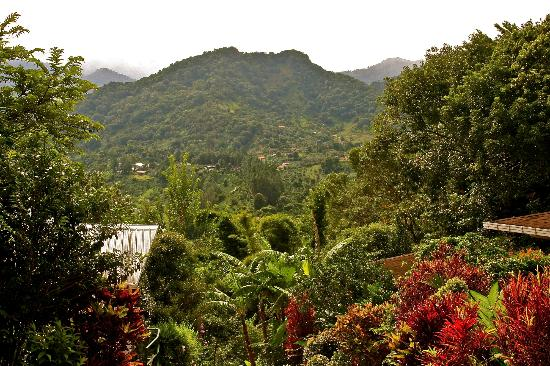La Montana y el Valle Coffee Estate Inn: view from our porch