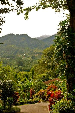 La Montana y el Valle Coffee Estate Inn: view of some of the grounds