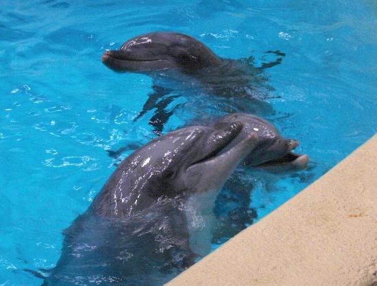 Dolfinarium: Dolfijnen binnen na de indoorshow (de grote show)