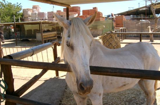 Nerja Donkey Sanctuary: Beautiful horse