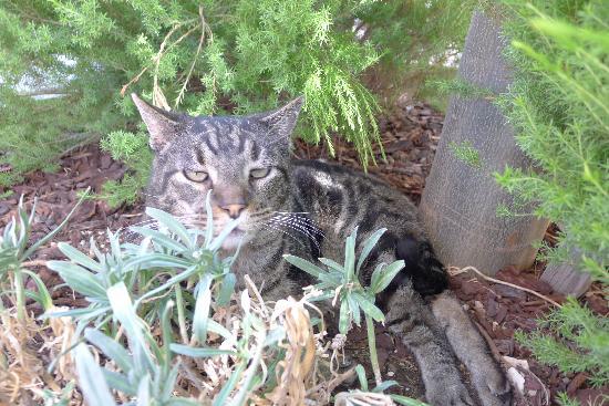 Rotta Winery: Klaus the 3-legged cat