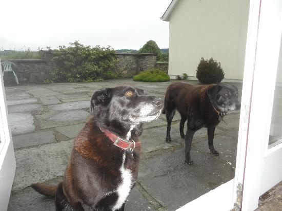 Croan Cottages: Bella and Poppy