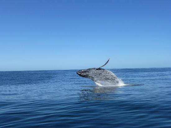 a whale leaping out of the water during a whale watching tour