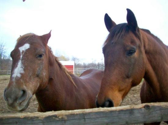 Lollypop Farm: Horses