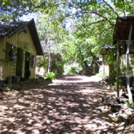 Tassajara Zen Mountain Center: Sycamore Shade on Main Path