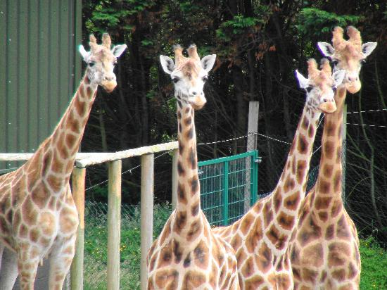 Blackpool Zoo : What's over there ?