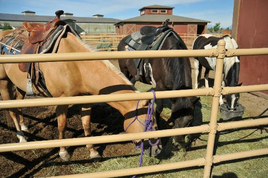 Brasada Ranch horseback riding