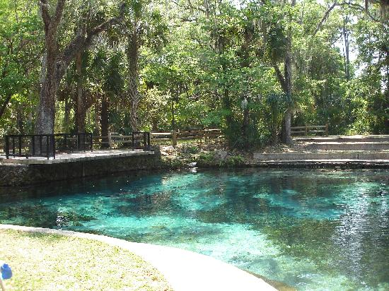 Nature Coast Inn: Relax at the Springs