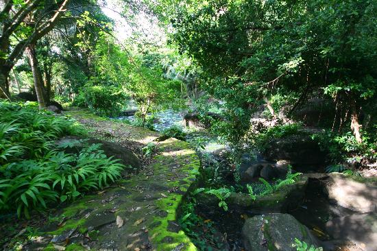 Phanom Bencha Mountain Resort: Path around the stream/pool