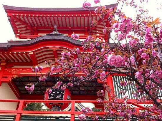 Nishinomiya, Japan: 2012年門戸厄神花見