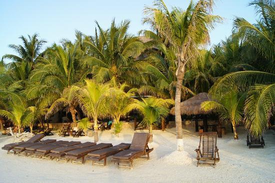 Beachfront Hotel La Palapa: La zona de cocoteros en la playa del hotel, la palapa al fondo es el hotel.
