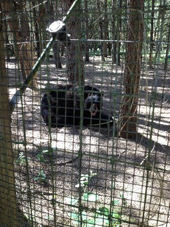 Wildlife Images - Rehabilitation & Education Center: black bear