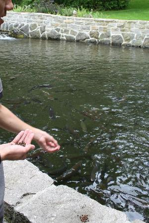 Sturgeon Viewing Pond and Interpretive Center : Feeding the trout at the trout pond