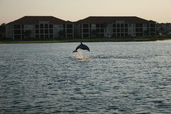 Atlantic Water Tours: Dolphin on Sunset Cruiseh