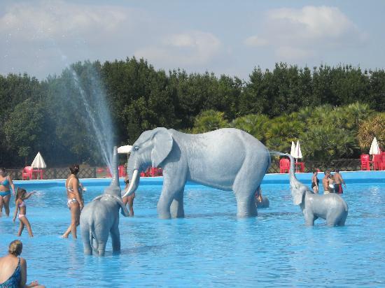 acquapiper elefantini