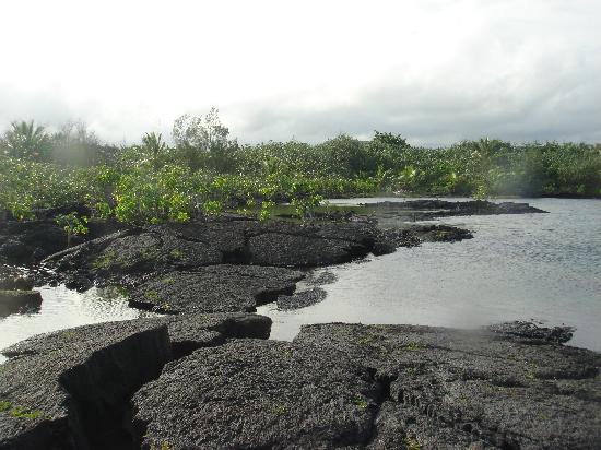Kapoho Tide Pools: Percorso tra giungla e oceano, da film