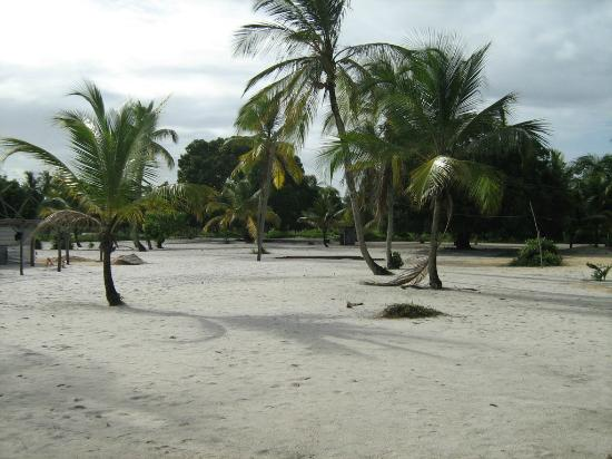Surinam: Galibi, nature reserve, amerindian village, turtles