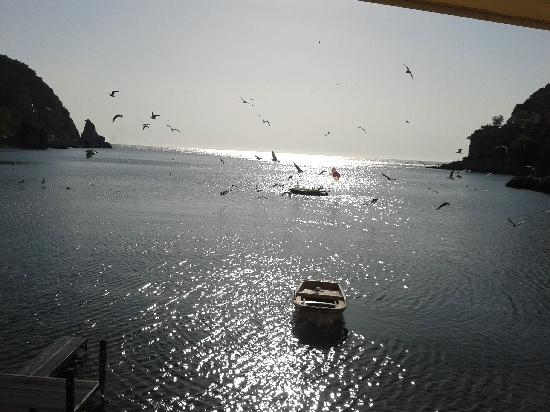 """Mustafa Amcanin Yeri: """"Canlı balık"""" dan deniz"""