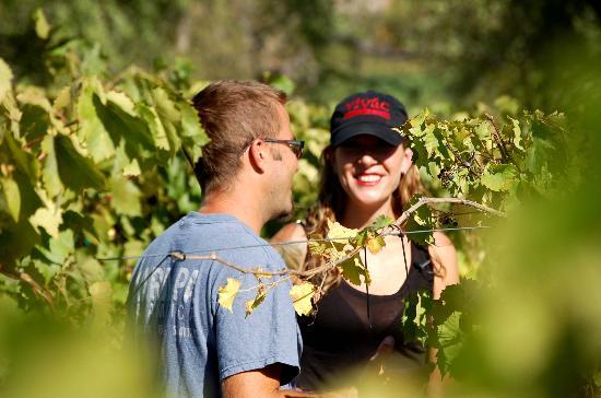 Vivac Winery: in the vineyard