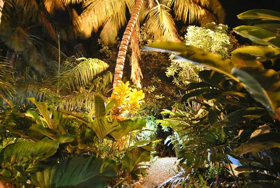 Cabarete Surfcamp: Night  views of the garden at the surf camp