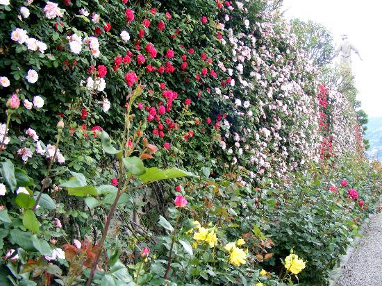Milan Speranza Au Lac : Wall of Flowers Isola Bella