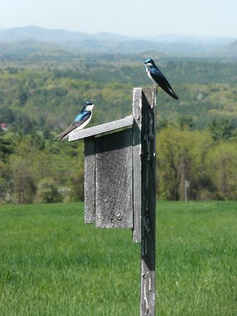Bartholomew's Cobble: Great trails for bird-watching!