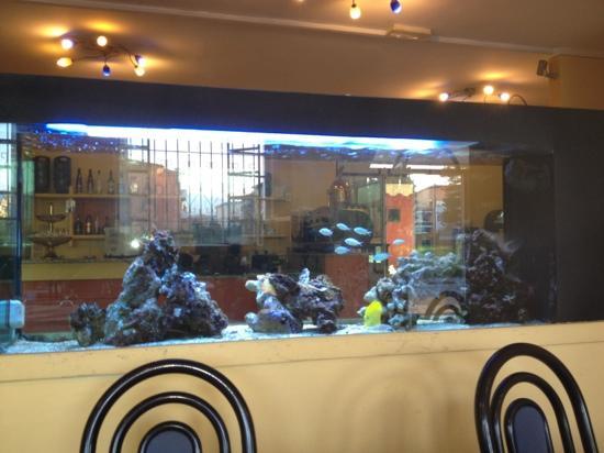 Ristorante Pizzeria Paradise : l'acquario