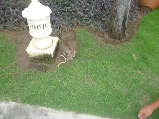 Melia Cayo Coco: kitten