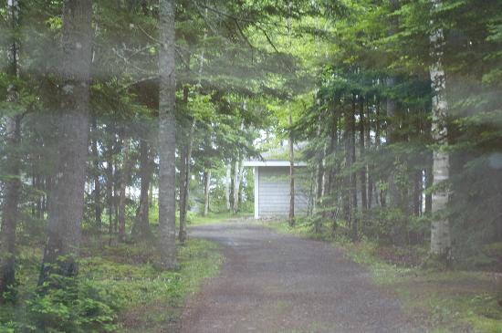 Four Seasons Retreat: Driveway through trees up to cabin