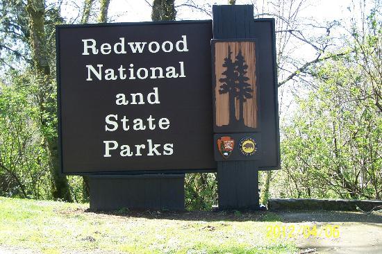 Klamath River RV Park: Adjacent California Redwoods
