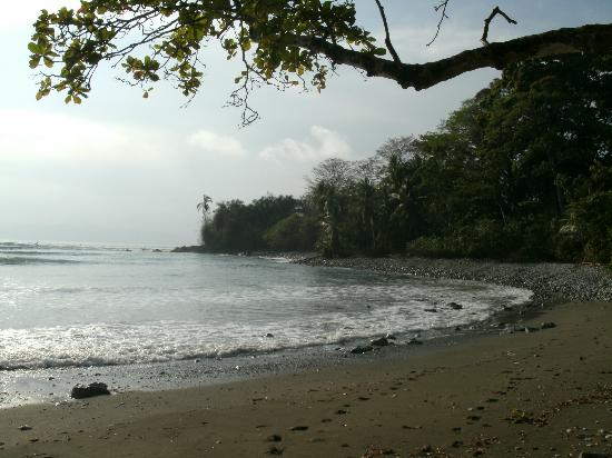 Osa Clandestina: Playa Pan Dulce