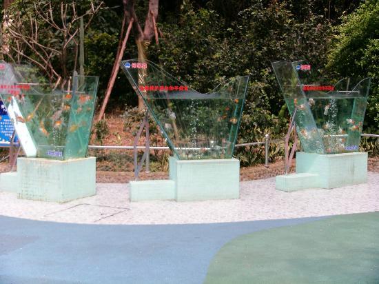 Guangzhou Zoo: fish