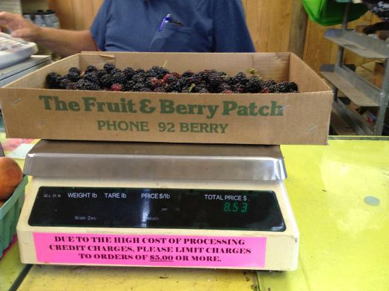 The Fruit and Berry Patch: Just an hour's worth of picking yields a good bounty!