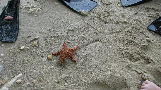 Bluefields Bay Villas: Fun finding Starfish