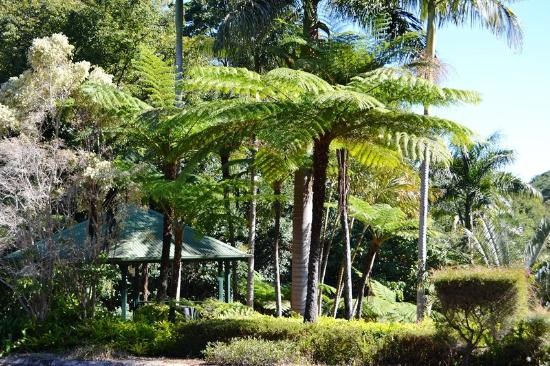 Montville Mountain Inn Resort: Tropical gardens