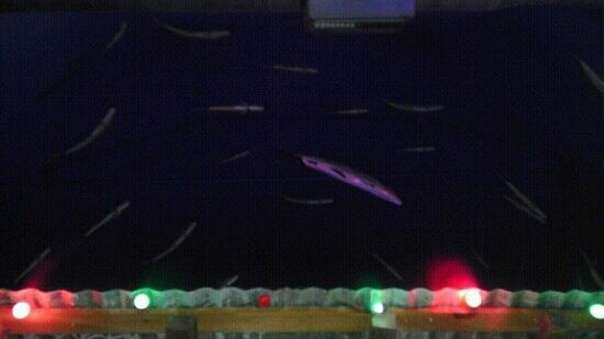 Bonefish Mac's: fish on, the ceiling above the bar