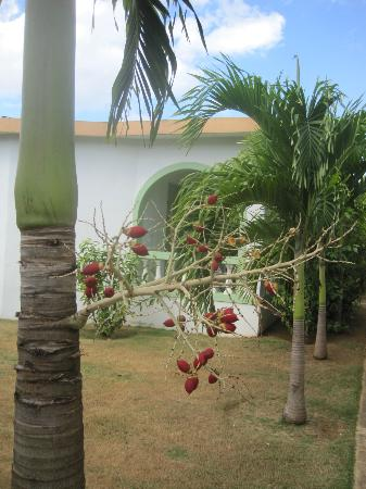Hidden Paradise Resort Hotel: Trees outside my cabin