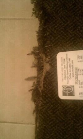 Motel 6 Dillon: Torn up carpet