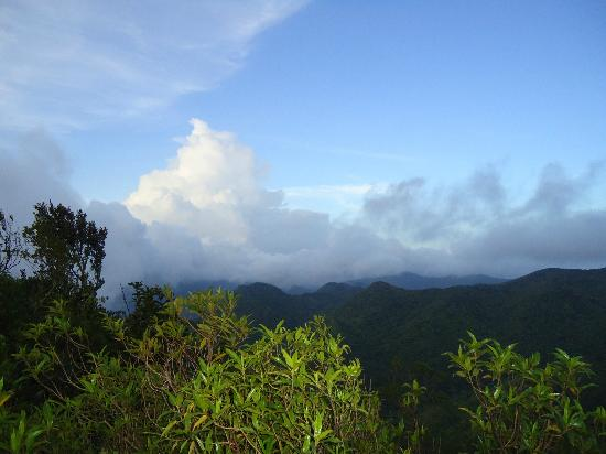 Jayuya, เปอร์โตริโก: View from the trail to the summit