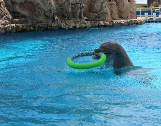 Texas State Aquarium : The dalphon playing with his tube on top of the water.  More fun!