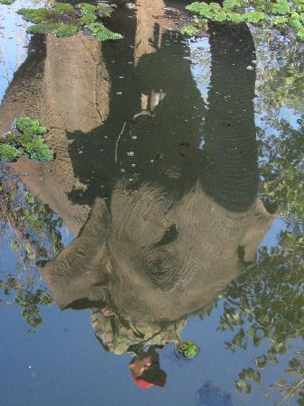 Elephant Conservation Center: Reflection