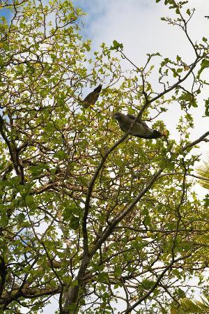 Tuamotu Archipelago, French Polynesia: ile aux oiseaux