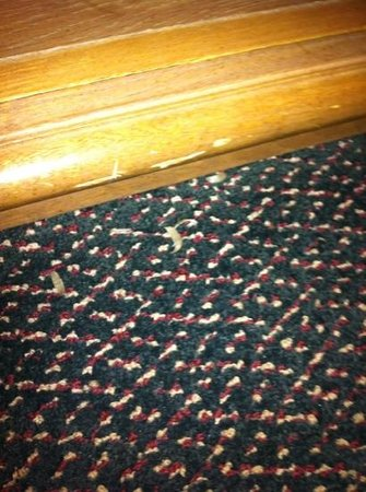 Rodeway Inn & Suites Shreveport: toenails on the floor