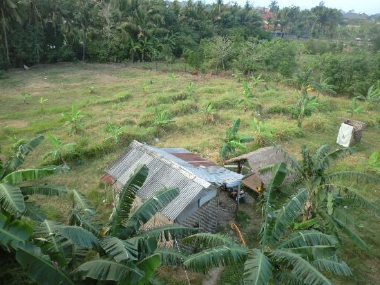 Homestay Bali Starling: Vue de la chambre, sur l'authentique campagne balinaise